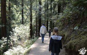 Notre randonnée de 1h30 dans muir woods près de San Francisco