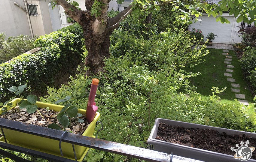 Les jardinières sont au balcon : Fraises et narcisses