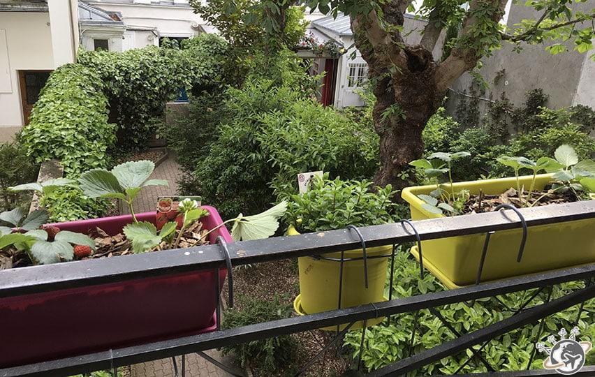 Planter des fraises en jardinire comment faire pousser - Planter fraisier en jardiniere ...
