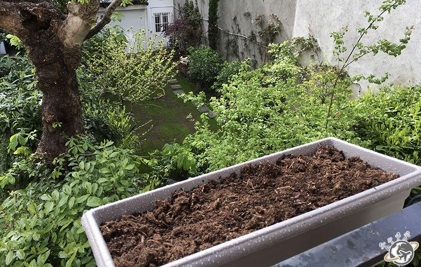 La jardinière des narcisses.