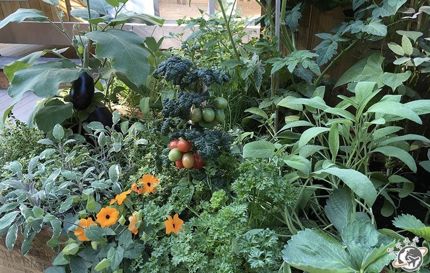 Les légumes de Rustica