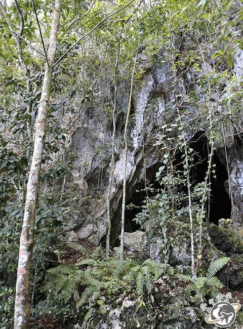Une grotte dans le Parc National de Los Haitises au large de Samana dans le Nord de la République dominicaine