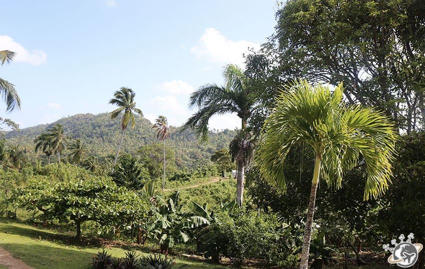 Sortie quad à Las Terrenas, Samana, Répblique dominicaine