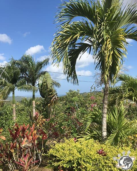 Pause dans la montagne dominicaine