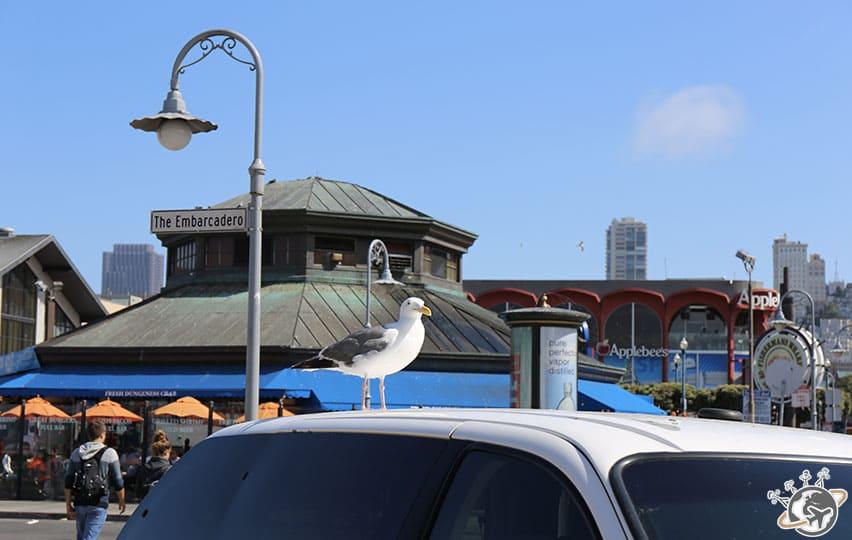 Les mouettes de Fisherman's Wharf à San Francisco