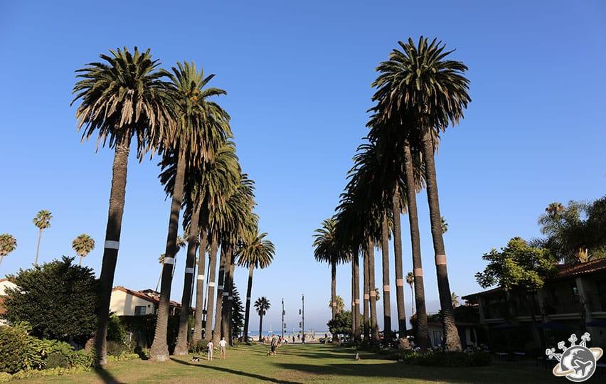 une allée de palmiers à Santa Barbara en Californie