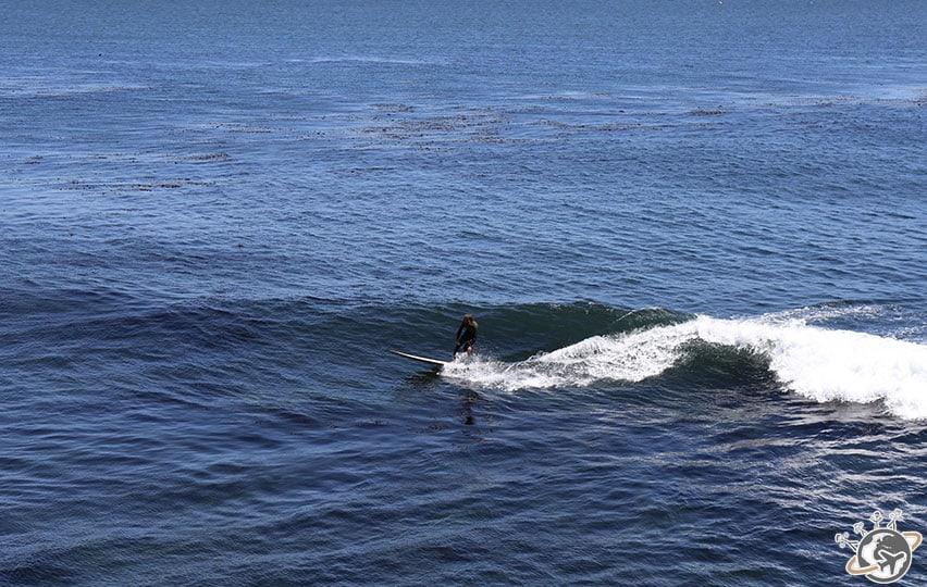Un surfeur à Santa Cruz en Cali