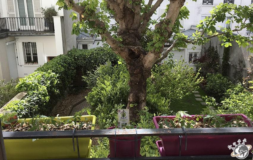 Les jardinières sont au balcon : tomates et basilic