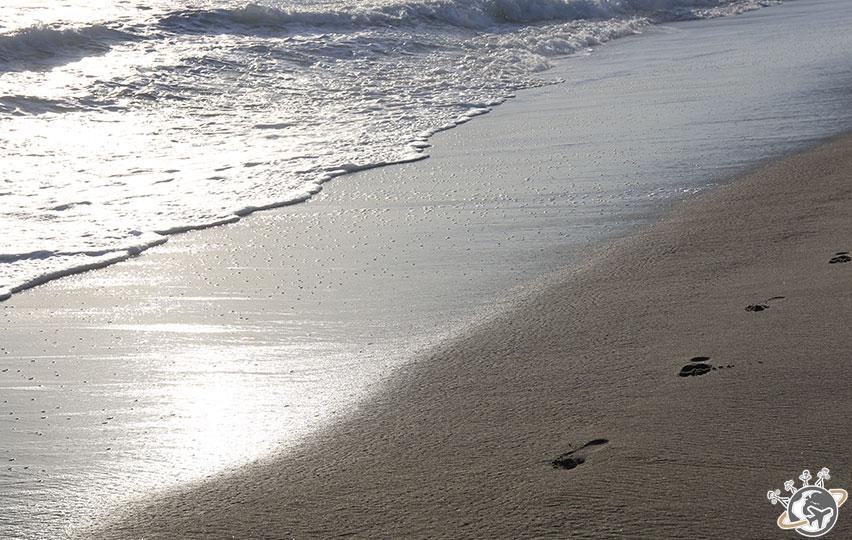 La plage en face de notre apparthotel à Venice Beach à Los Angeles en Californie