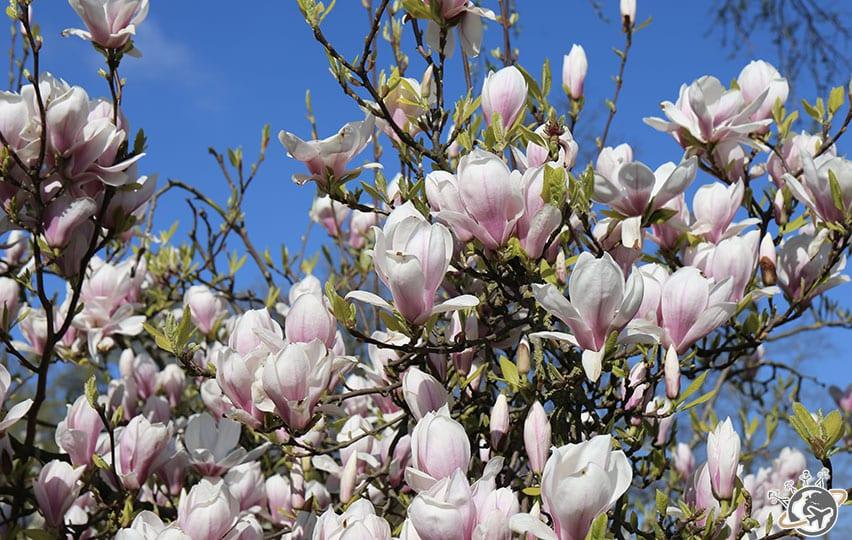 Les jolies fleurs dans Westerpark.